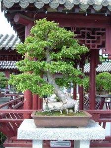 Botanical Gardens 030