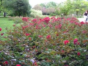 Botanical Gardens 032