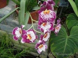 Botanical Gardens 036