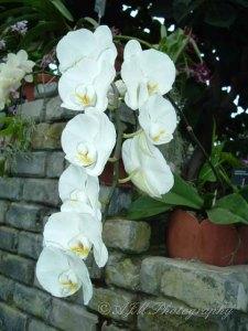 Botanical Gardens 037