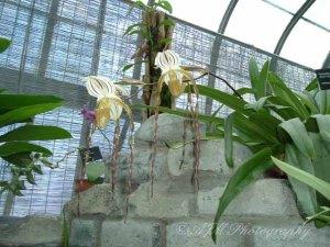 Botanical Gardens 038