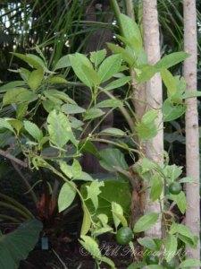 Botanical Gardens 042