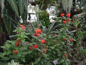Botanical Gardens 043